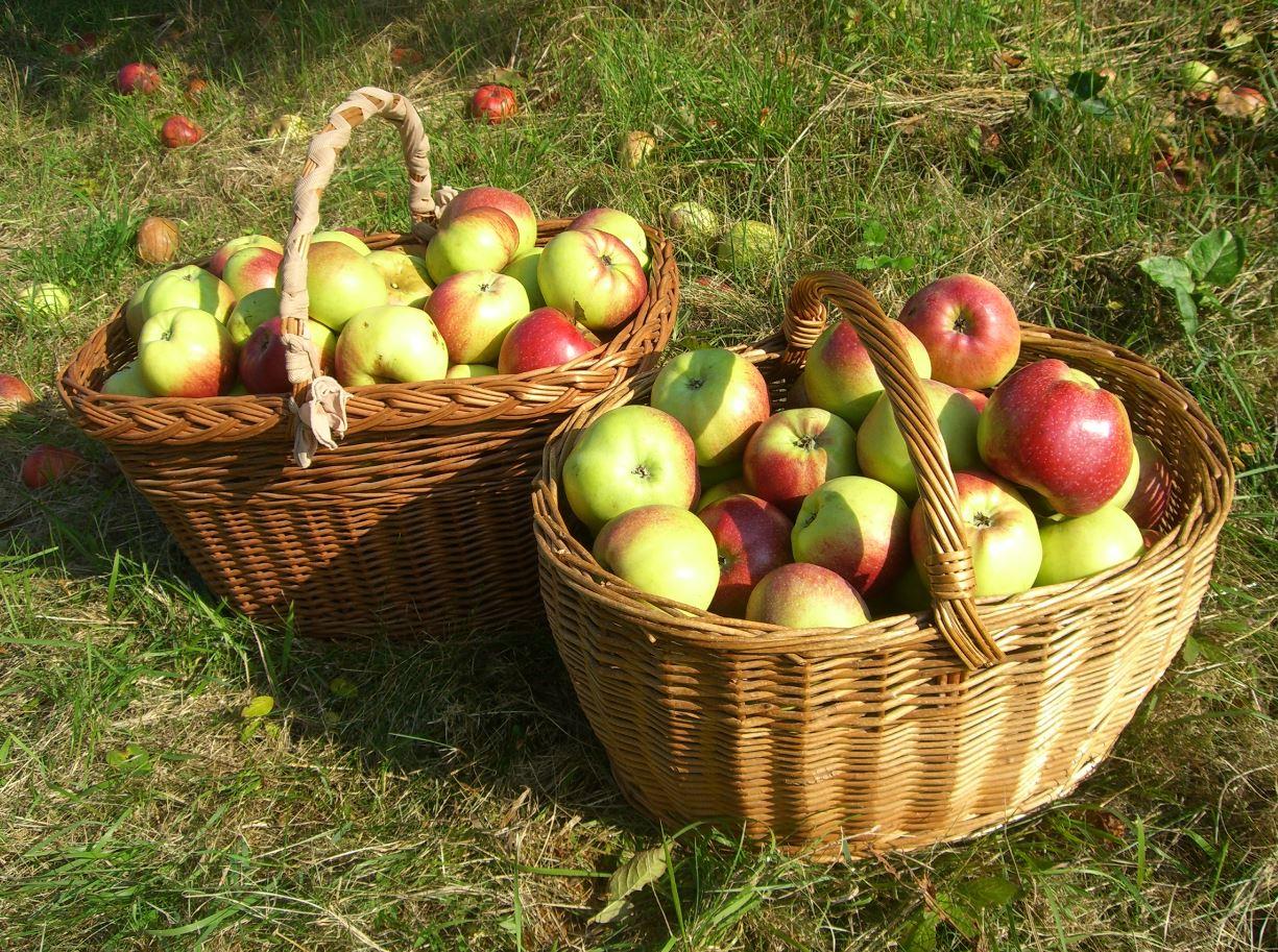 BBW bringt Apfel zur Welt
